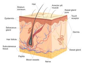 image showing huidziekten