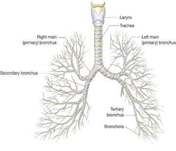 mnit astma 1